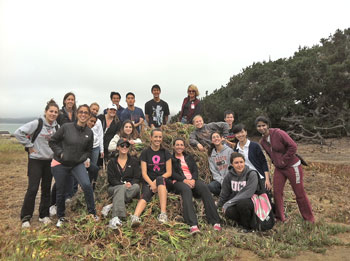 Students from Arthur A. Dugoni School of Dentistry Volunteered Their Time at Baker Beach Removing Nonnative Plants.